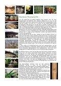 Bambus die Powerpflanze - Fit-Total - Seite 3