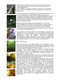 Bambus die Powerpflanze - Fit-Total - Seite 4