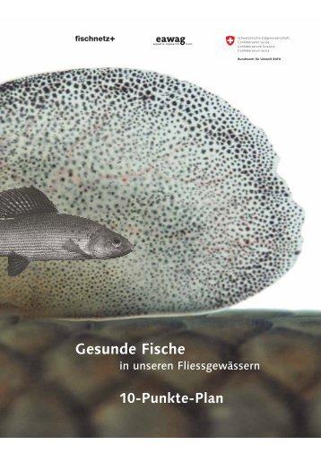 Gesunde Fische in unseren Fliessgewässern: 10 ... - BAFU - CH