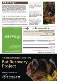 Bat Brochure - Forest and Bird