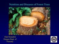 Nutrition and Diseases of Forest Trees