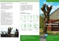 Kopfbäume - Lebenslange Pflegefälle - Naturpark Hoher Fläming