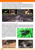 Managing Woody Debris - FreshwaterLife - Page 6