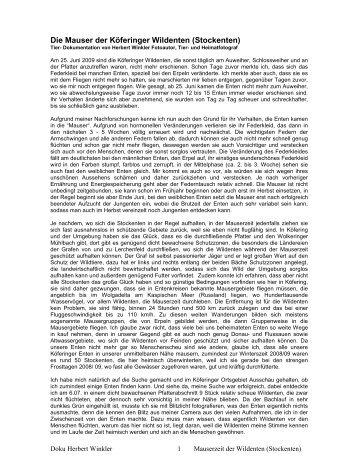 PDF- Bericht über die Mauser bei Stockenten ... - Herbert Winkler