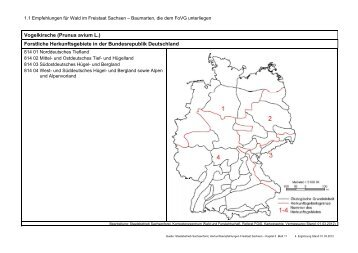 Prunus avium L. - Wald, Forstwirtschaft, Jagd - Freistaat Sachsen