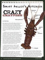 Crazy Crayfish