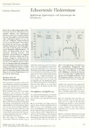 Echoortende Fledermäuse, Neuweiler 1990 - Fledermaus-Bayern