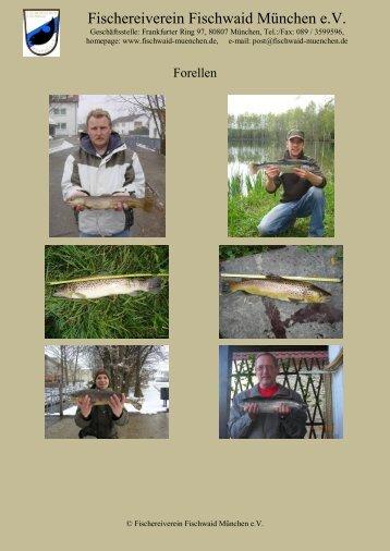 Forellen - Fischwaid München