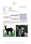 Stuten Katalog 2012 - Avalon Alpacas Germany Gbr - Seite 4