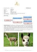 Stuten Katalog 2012 - Avalon Alpacas Germany Gbr - Seite 6