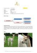 Stuten Katalog 2012 - Avalon Alpacas Germany Gbr - Seite 7