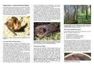 Fledermausschutz im Wald - Fledermaus-Bayern