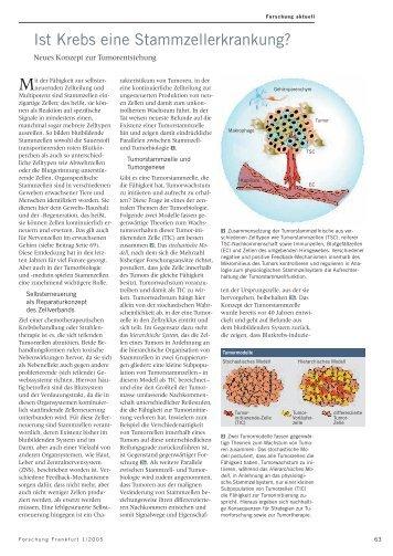 Ist Krebs eine Stammzellerkrankung? - Forschung Frankfurt ...