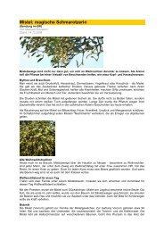 Mistel Magische Schmarotzerin - Forum-Bioenergetik eV