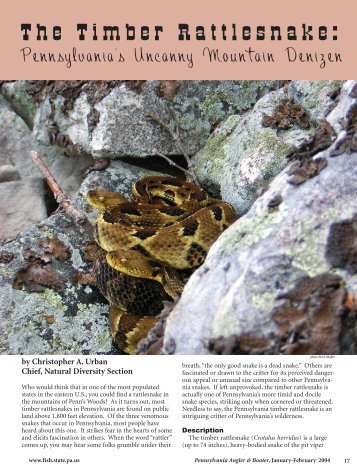 The Timber Rattlesnake - Pennsylvania Fish and Boat Commission