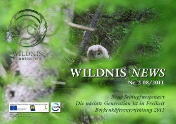 WILDNIS NEWS - Wildnisgebiet Dürrenstein
