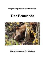Der Braunbär - Naturmuseum St.Gallen