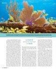 [Exuma Cays] Ein unrühmlicher Strandabschnitt ... - Polina Reznikov - Seite 3