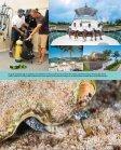 [Exuma Cays] Ein unrühmlicher Strandabschnitt ... - Polina Reznikov - Seite 6