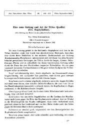 Eine neue Gattung und Art der Tribus Quediini (Col. Staphylinidae ...