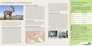 Der Alpensteinbock - eine Erfolgsgeschichte» (pdf) - Pro Natura