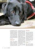 """Wenn Hunde plötzlich """"böse"""" - Leben mit Tieren - Seite 3"""