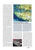 Geleceğin Enerji Kaynağı Metanhidratlar 2002 - Page 2