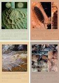 kosmos kompost 2009 - Seite 2