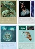 kosmos kompost 2009 - Seite 3