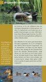Die Dobben und die Westseite - Naturpark Dümmer - Seite 5