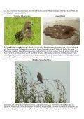 Schwarzer Tag für Greifvögel Der Hagelsturm am 7. Juli hat nicht ... - Seite 2