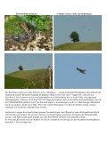Schwarzer Tag für Greifvögel Der Hagelsturm am 7. Juli hat nicht ... - Seite 5