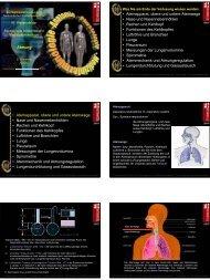 Atmung • Atemapparat, obere und untere Atemwege • Nase und ...