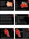 Atmung • Atemapparat, obere und untere Atemwege • Nase und ... - Seite 3