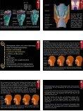 Atmung • Atemapparat, obere und untere Atemwege • Nase und ... - Seite 5