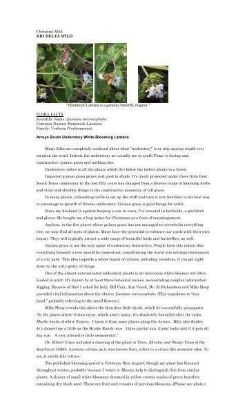 "Lantana microcephala - Christina Mild's ""Rio Delta Wild"""