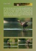 das schwimmende Tarnzelt - daniel montanus - Seite 5