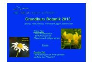 Einführung Botanik 2013