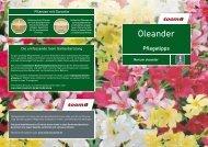 Oleander - toom Baumarkt