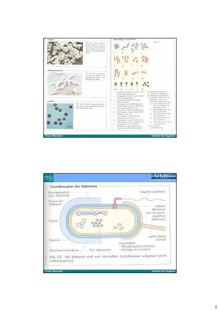 Mikrobiolobie - Bakteriologie I - PharmXplorer