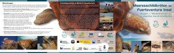 Meeresschildkröten im Fuerteventura Insel - Cabildo de Fuerteventura