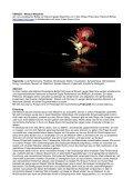 Konzept zu Versus - Podium09 - Seite 2