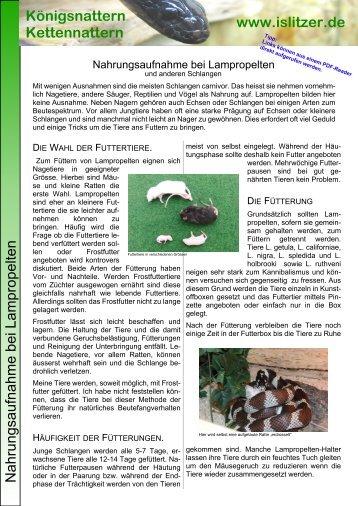 Nahrungsaufnahme bei Lampropelten und anderen ... - Islitzer.de