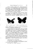 Die Mißbildungen der Schmetterlinge und Versuche zu ihrer ... - Seite 5