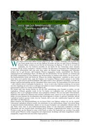 Auf der Pirsch nach dem wilden Lophophora - Lophophora.info
