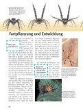 Spinnen - Die Onleihe - Seite 4