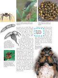 Spinnen - Die Onleihe - Seite 5