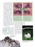 Spinnen - Die Onleihe - Seite 6