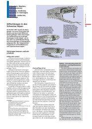 Giftschlangen in den Schweizer Alpen - SLF