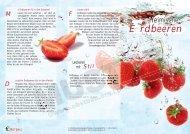 Erdbeeren - Bundesfachgruppe Obstbau e.V.